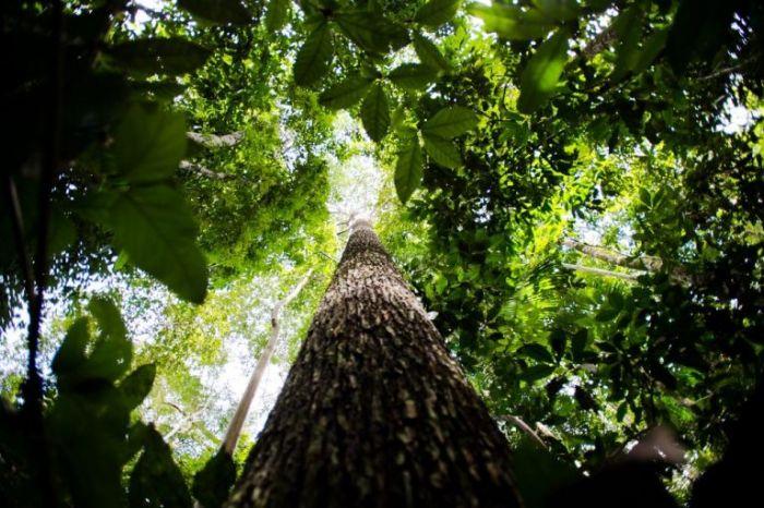 Projeto que flexibiliza a lei sobre concessões de florestas foi apresentado por nove deputados - (Foto: Marcelo Camargo/Agência Brasil)