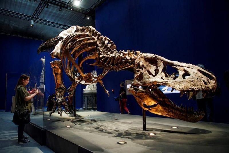 Pesquisadores estudaram um T.rex de 12 metros de comprimento - (Foto: EPA/CHRISTOPHE PETIT TESSON)